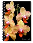 Orange Orchid Phalaenopsis Spiral Notebook