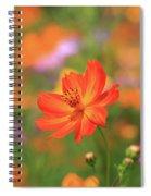 Orange Painted Landscape Spiral Notebook