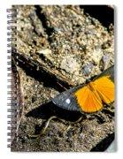 Orange Patch Spiral Notebook