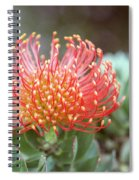 Orange Pincushion Protea Spiral Notebook