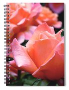 Orange-pink Roses  Spiral Notebook