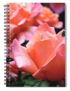 Orange-pink Roses  Spiral Notebook