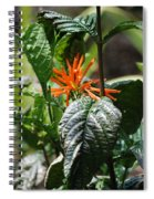 Orange Plants Spiral Notebook