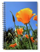 Orange Poppy Blue Sky Spiral Notebook