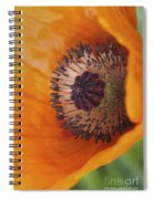 Orange Poppy With Texture Spiral Notebook