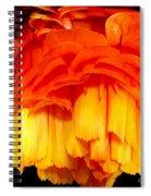 Orange Ranunculus Polar Coordinate Spiral Notebook