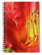 Orange-red Day Lily Spiral Notebook