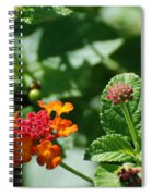 Orange  Red Flowers Spiral Notebook