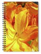 Orange Rhodies Flowers Art Rhododendron Baslee Troutman Spiral Notebook