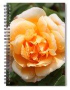 Orange Rose Square Spiral Notebook