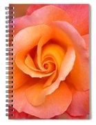 Orange Rosebud Highlight Spiral Notebook