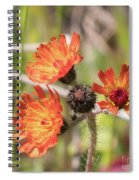 Orange Small Flowers With Buds Spiral Notebook