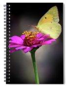 Orange Sulphur Butterfly Portrait Spiral Notebook