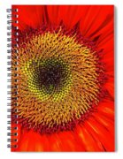 Orange Sunflower Spiral Notebook