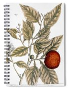 Orange Tree, 1735 Spiral Notebook