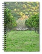 Orange Trees And Sheep Flock Spiral Notebook