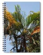 Orange Trees Spiral Notebook