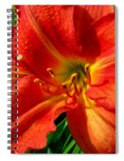 Orange Trumpeting Lily Spiral Notebook