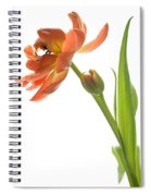 Orange Tulip Spiral Notebook