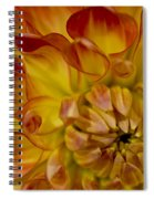 Orange-yellow Spiral Notebook