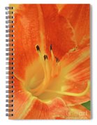 Orange-yellow Daylily Spiral Notebook
