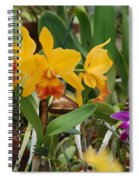 Orangepurple Orchids Spiral Notebook