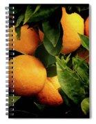 Oranges Spiral Notebook