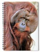 Orangutan Male Closeup Spiral Notebook