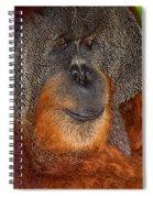 Orangutan Male Spiral Notebook