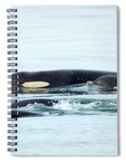 Orca Family Photo Spiral Notebook
