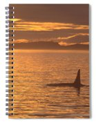 Orca Killer Whale Spiral Notebook