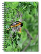 Orchard Oriole Feeding The Kids Spiral Notebook
