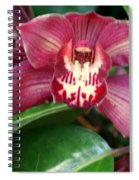 Orchid 10 Spiral Notebook