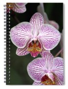Orchid 22 Spiral Notebook