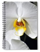 Orchid 23 Spiral Notebook