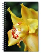 Orchid 24 Spiral Notebook