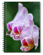 Orchid 30 Spiral Notebook
