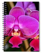 Orchid 422 Spiral Notebook