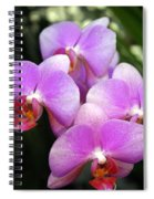 Orchid 5 Spiral Notebook