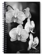 Orchid Cluster Close-up Spiral Notebook