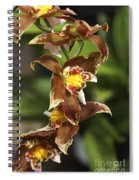 Orchid Curve Spiral Notebook