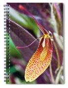 Orchid Flower - Restrepia Radulifera Spiral Notebook
