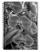 Orchid Glory Black And White Spiral Notebook