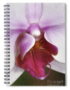 Orchid Portrait In Craquelure Spiral Notebook