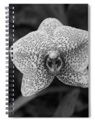 Orchid Spiral Notebook