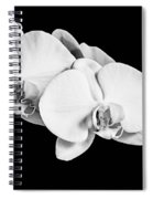 Orchid - Bw Spiral Notebook