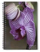 Orchid Strips Spiral Notebook