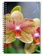 Orchids 35 Spiral Notebook