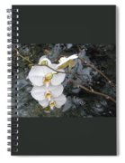 Orchids And Water Spiral Notebook