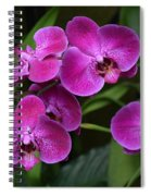 Orchids In Vivid Pink  Spiral Notebook